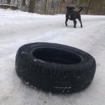 Ten pes nemá rád pneumatiky