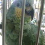 Papoušek ve Vaňkovce