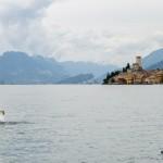 Labuť na jezeru Lago, Malcesine