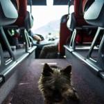Pes v autobusu :)