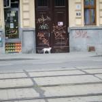 Ztracený pes v Lužánkách