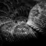 Had v Zoo Brno