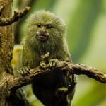 Opička v ZOO Brno