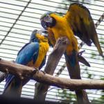 Papoušci Ara v Zoo Brno