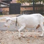 Kozy na Špilberku