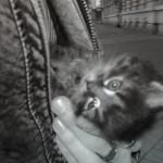 Nalezená kočka pod bundou
