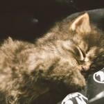 Nalezené kotě spinká