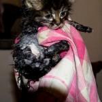 Nalezené kotě po koupání