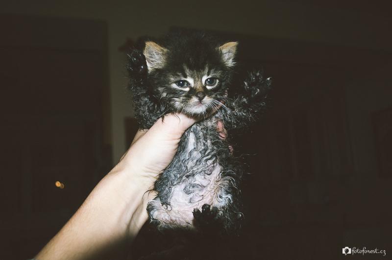 Nalezené kotě poprvé u nás doma
