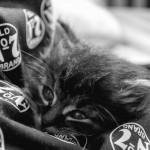 Nazelené kotě druhý den v naší péči