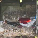 Kde spí pouliční kočka