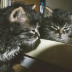 Naše Kotě v zrcadle
