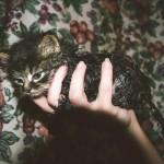 Koupání kočky