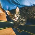 S kočkou na klíně