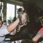 Nejroztomilejší kotě
