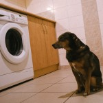 Bimbo sleduje pračku