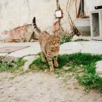 Kočka z Pouzdřan