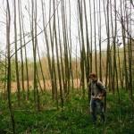 Jsem Forest