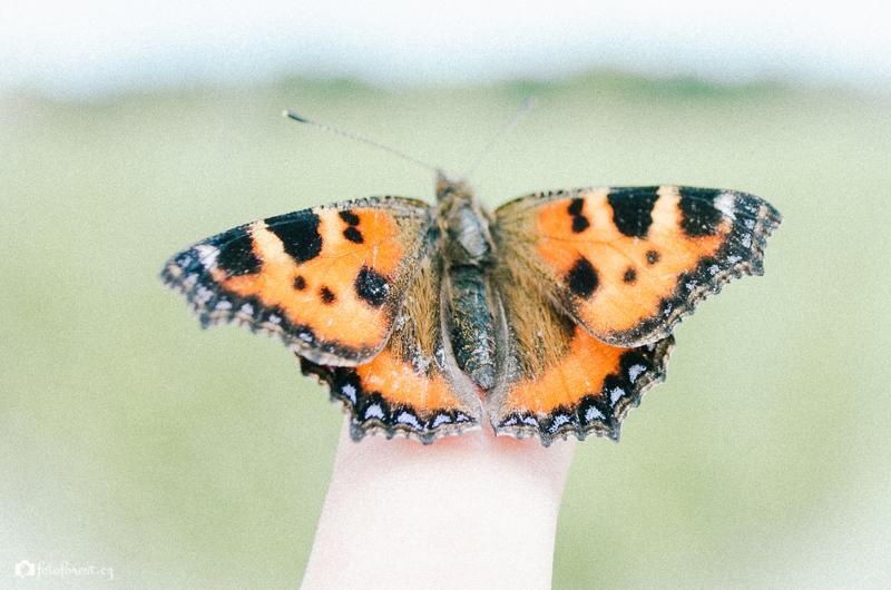 Motýl na prstě