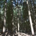 Les v Údolí oddechu