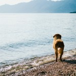 Pes u moře