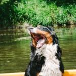 Se psem na raftu