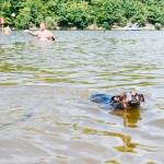 Bimbo plave v přehradě
