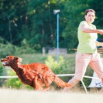 Brněnské psí dny 2014 - agility, dog frisbee a dogdancing