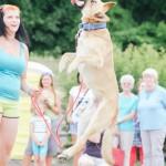 Ukázka bull sportů na brněnských psích dnech