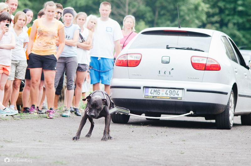 Pes táhne auto