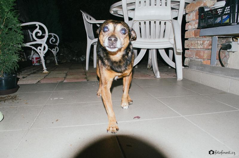 Divoký pes Bimbo