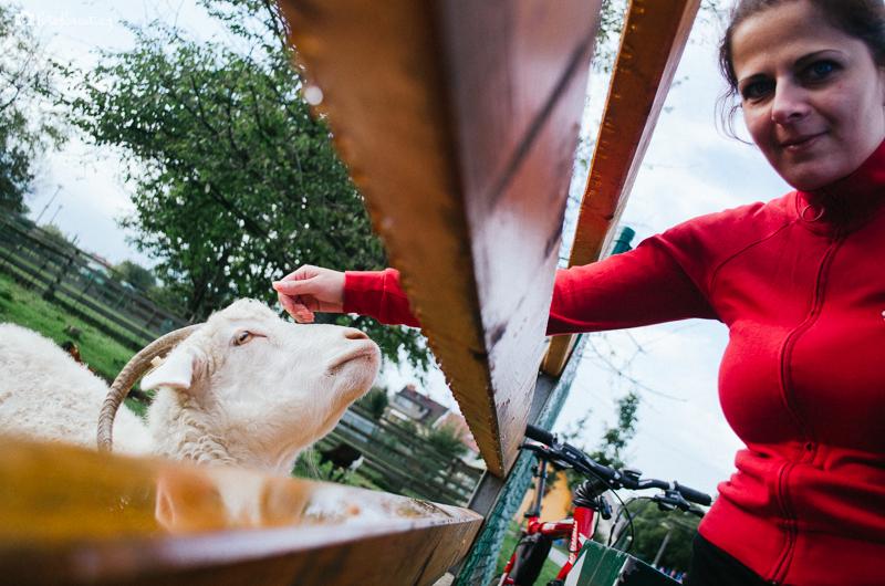 Farma zvířat u cyklostezky do Olympie