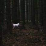 Maryn v lese