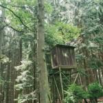 Posed v lese