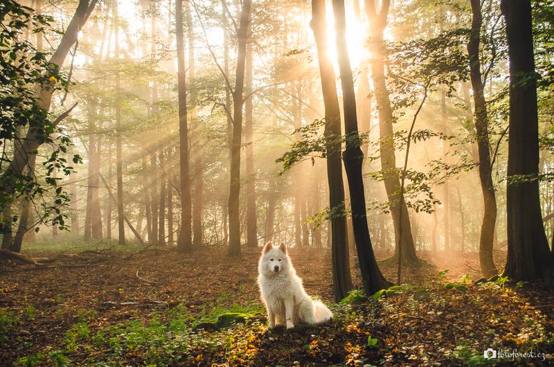 Tyndallův jev v lese