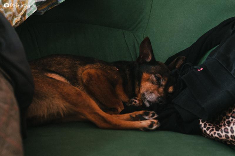 Bimbo spí