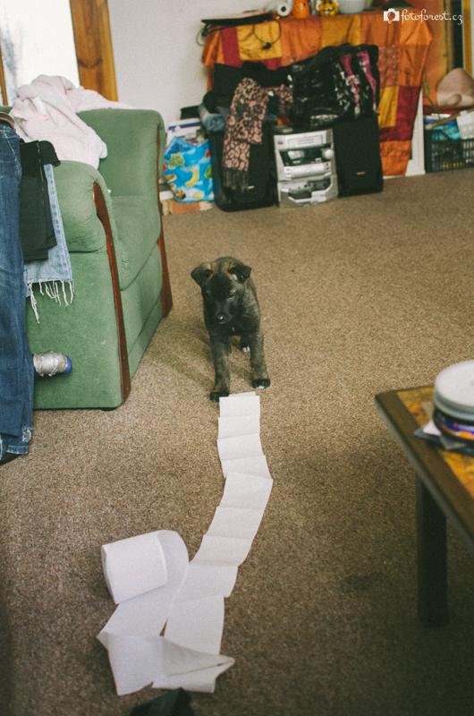 Buči a toaletní papír