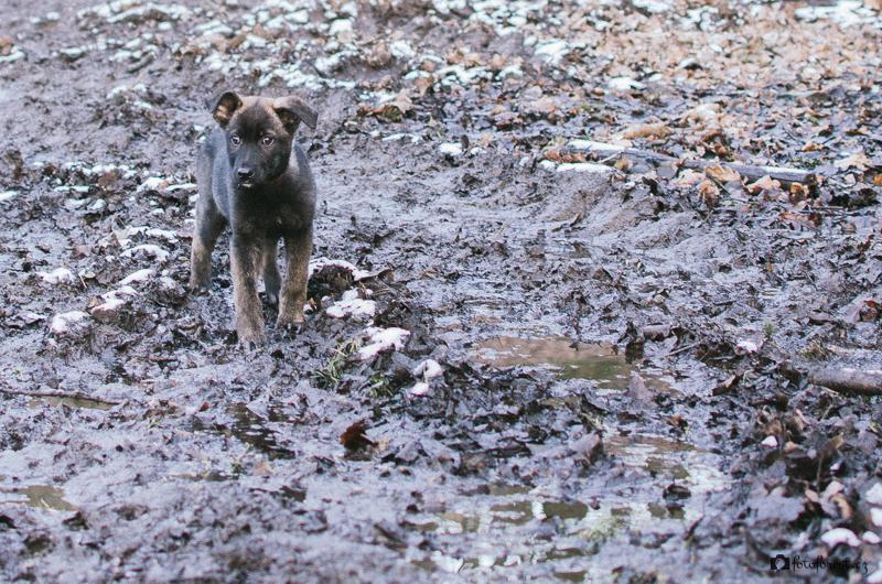 Buči v blátě