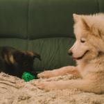 Buči si hraje s Márynkou