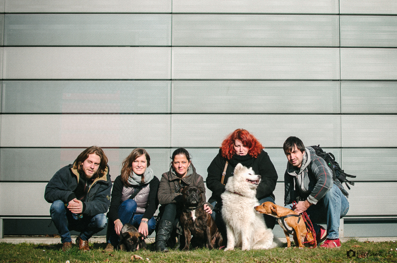 Duo Cacib Brno 2015 výstava psů