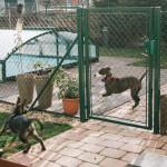 Seznamování psů přes plot