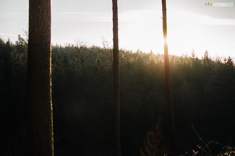 Příroda okolo Brna