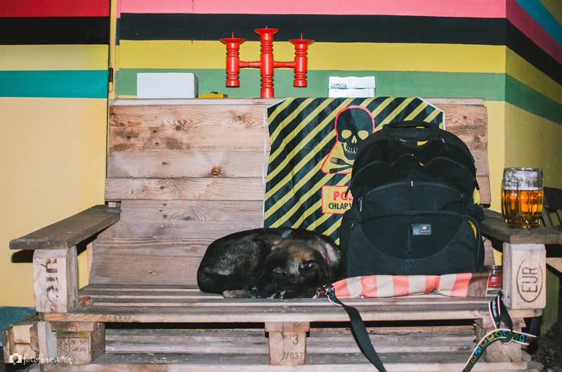 Buči spí v klubu Na Dráze