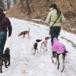 Na procházce se psy