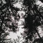 Stromy nad námi
