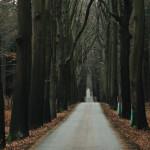 Cesta alejí