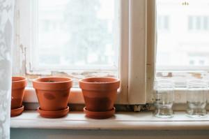 Zasadil jsem bylinky na okno