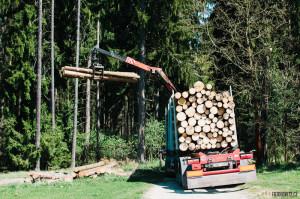 Nakládka stromů v lese