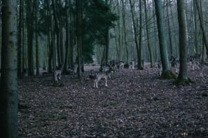 Srnky v lese