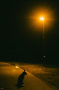 Buči a lampa